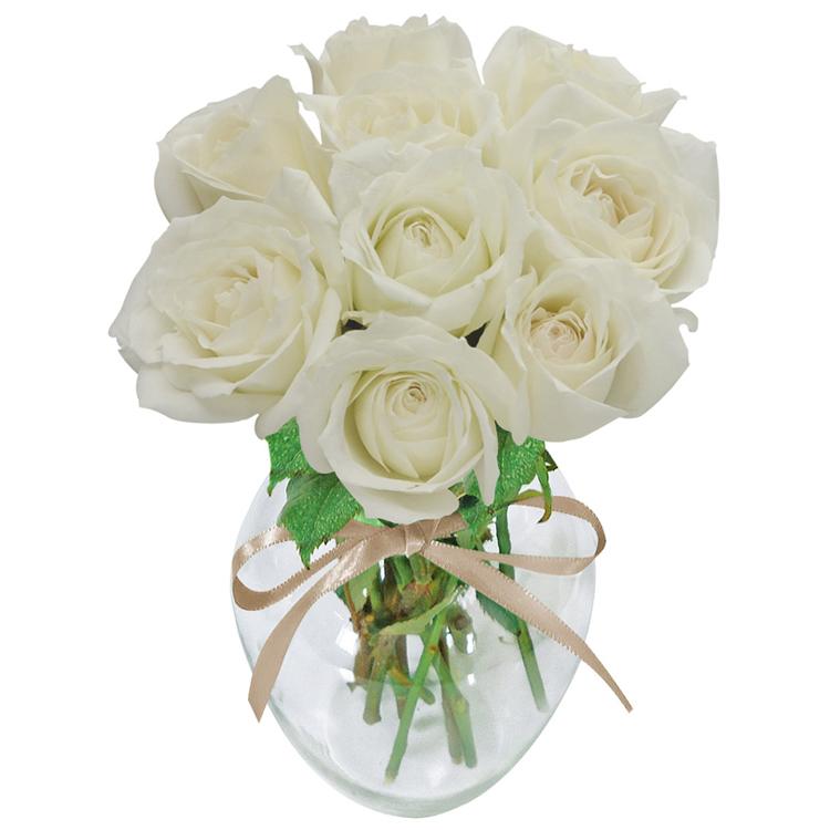 Rosa branca no vaso