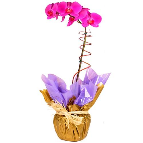 orquidea para presente